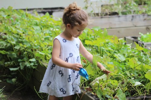 Parenting Is Like Gardening